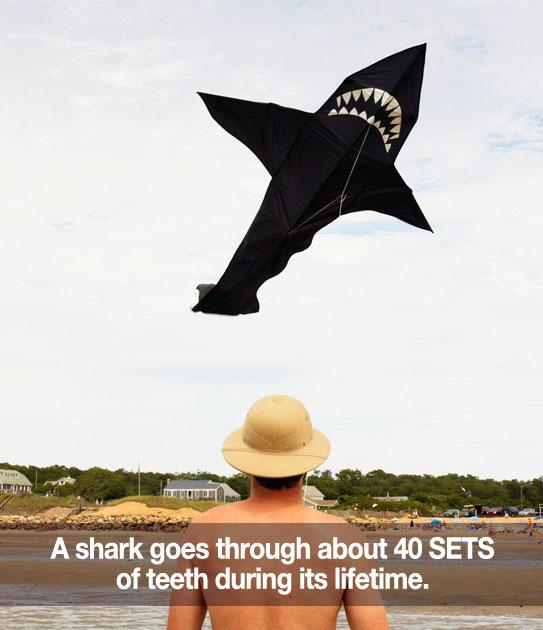 i00227_N_shark1