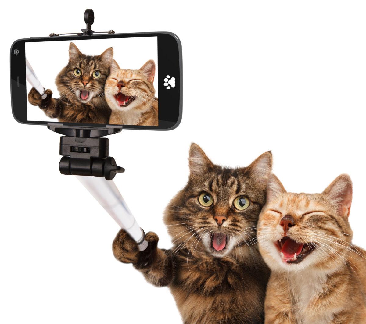 taking-perfect-selfie